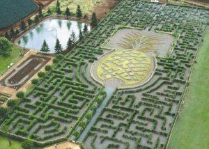 About Dole Plantation